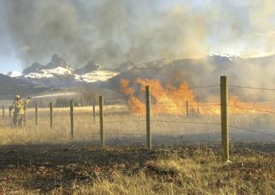 grassfirekenlevy56-2